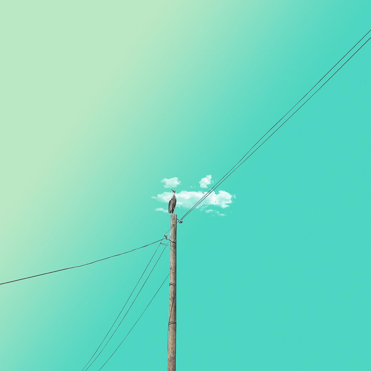 Lonly bird